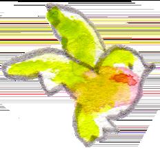 イラスト 水彩 小鳥